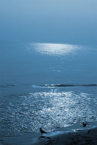 colour photo of beach at dawn with seagull